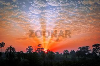 Sonnenuntergang über dem Bugoma Forest Regenwald in Uganda | Sunset at Bugoma Forest in Uganda