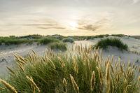 Beach with sand dunes and marram grass with soft sunrise sunset back light. Skagen Nordstrand, Denmark. Skagerrak, Kattegat.