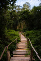 A raised wooden walkway leads the way through dense foliage and forest.