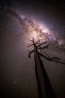 Tree reaches for the stars shining brightly overhead