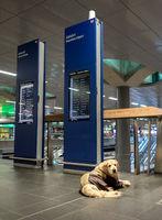 Hund im Bahnhof