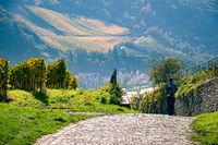 Path through a Vineyard