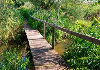 Wooden footbridge in a natural landscape