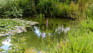 Schlossteich im Sommer mit Spiegelung
