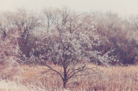 Iced tree and shrubs in a winter
