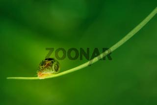 close up aquarium snail on green background