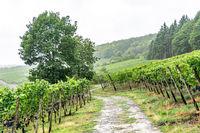 Unterwegs auf dem Rotweinwanderweg im Ahrtal
