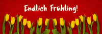 Baner Of Yellow Tulip, Red Background, Endlich Fruehling Means Finally Spring