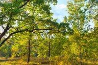 Autumn park sunset colorful trees