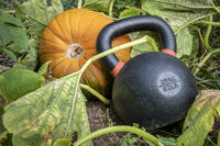 heavy kettlebell and pumpkin