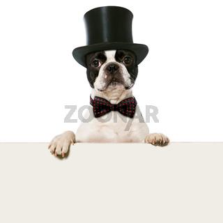 Hund mit Zylinder