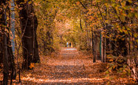 Autumn in the forest. Perspective of the path in fall park whith bright fallen autumn leaves on road in sunny morning light, toned photo