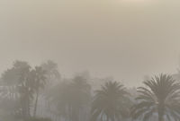 Background of tropical nature, silhouette of coastal palm trees during misty foggy weather. Torrevieja, Province of Alicante, Costa Blanca, Spain