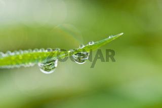 Wassertropfen mit Spiegelung an einem Grashalm