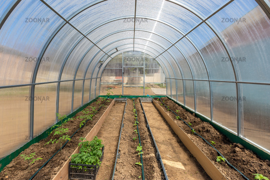 Vegetables in greenhouse drip irrigation