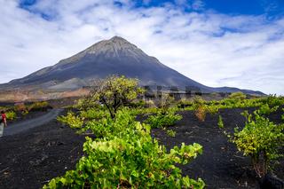 Pico do Fogo and vines in Cha das Caldeiras, Cape Verde