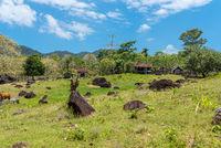Viehzucht auf der Insel Wen im nördlich von Sumatra