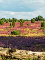 Landschaft in der Lüneburger Heide mit Baumstamm im Vordergrund, Niedersachsen, Deutschland
