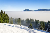 Amazing winter view to snowy Mountains above inversion fog clouds with forest trees. Early morning sunrise view from Oftersschwanger Horn to Gruenten and Allgauer Alps.