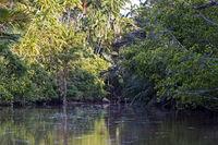 Dichte Vegatation mit grossem Artenreichtum, Kinabatangan Flussebene, Sabah, Borneo, Malaysia