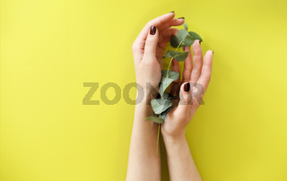 Crop anonymous female holding fresh green plant over yellow background