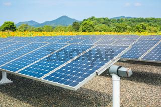 solar energy panels and sunflower farmland