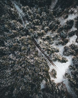 Aerial view of a snowy forest with high pines and road in winter