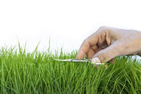Female hand precisely cutting lawn with scissors