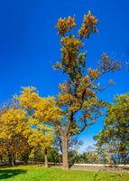 Shevchenko Park in Odessa, Ukraine