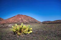 Ein Kaktus vor einem erloschenen Vulkan auf der Kanareninsel Lanzarote