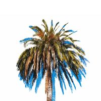palm tree illustration isolated