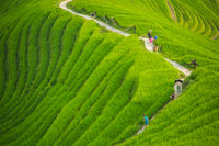 Walking path through Longji Rice Terraces