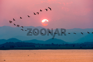 Birds flying over lake during sunset