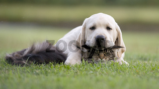 kitten and puppy friendship