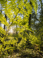 fern plants in the forest