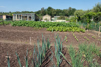 Dutch allotment garden with leek, onions, potatoes and shed