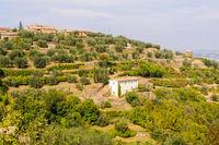 Farmhouse - Montalcino