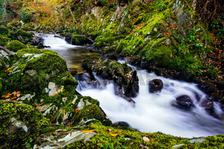 Cascades on a mountain stream with mossy rocks in Tollymore Forest Park