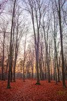Buchenwald im Frohnauer Forst im Herbst mit bunten Blättern