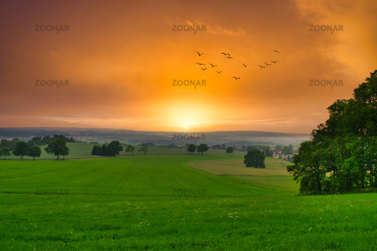 Birds flying over a green field at sunset