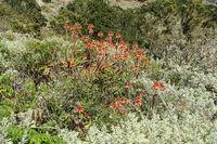 Typische Vegetation auf La Gomera