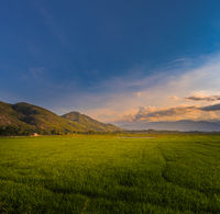 Beautiful landscape view of rice field and mountains. Panorama