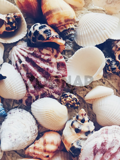 Seashells as summer coastal background, nature and travel