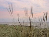 Bewegtes Dünengras mit der Ostsee im Hintergrund, Mecklenburg-Vorpommern, Deutschland