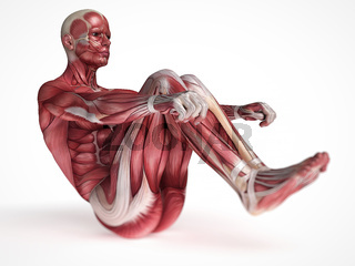 3d rendered scientific illustration of the males muscles
