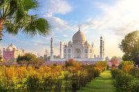 Beautiful Taj Mahal in the garden, India, Agra