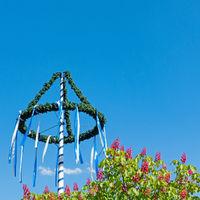Maibaum und Kastanienblüten vor blauem Himmel