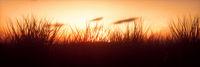 Panoramic Warm Sunset with closeup grass