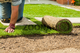 Gardening - Gardener laying sod for the new lawn