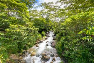 Costa Rica river in the jungle